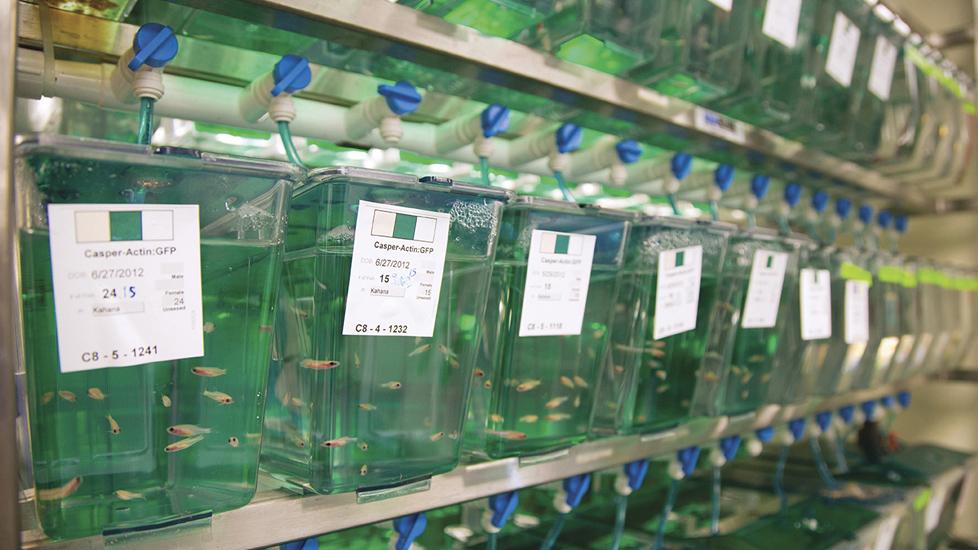 Vaccine trong nuôi trồng thủy sản