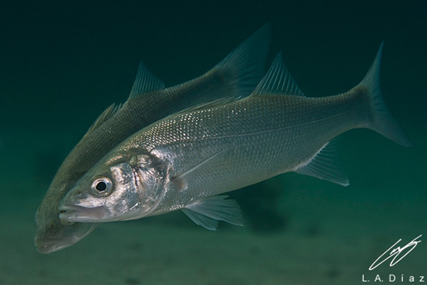 sản phẩm chiết xuất từ tảo trong nuôi trồng thủy sản