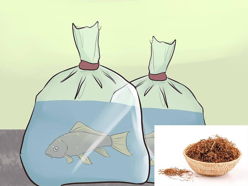 Ứng dụng thuốc lá trong vận chuyển cá
