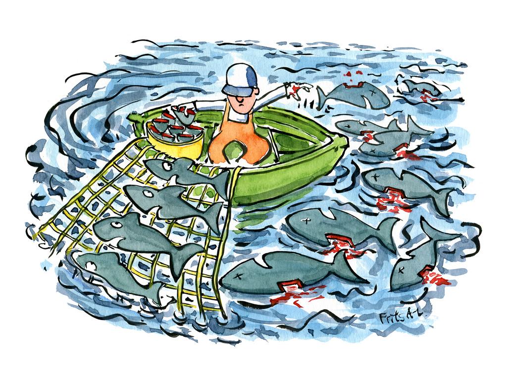 Một phần ba số loài cá mập bị buôn bán lấy vây đang bị đe doạ