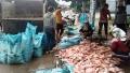 100 tấn cá chết trên hồ thủy điện