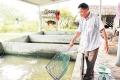 Ương cá giống dễ làm, lãi cao, dễ dàng bỏ túi tiền tỷ mỗi năm