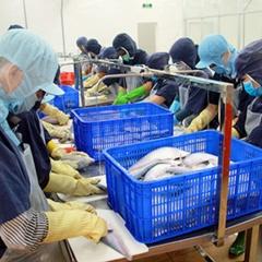 Liên kết phát triển cá thát lát Hậu Giang