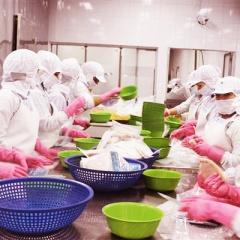 EU đang tăng cường kiểm tra giấy chứng nhận khai thác hải sản