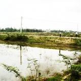 Hướng đi nào cho dự án vùng nuôi tôm tập trung ở Duy Xuyên