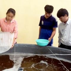 Ninh Thuận: Siết chặt kiểm soát chất lượng tôm giống