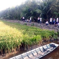 Luân canh tôm lúa trên vùng đất phèn nhiễm mặn