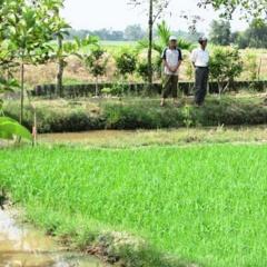 Nông dân Bạc Liêu làm giàu từ mô hình nuôi kết hợp