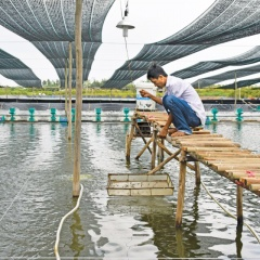 Nông dân Hòa Tân hướng đến mô hình nuôi tôm siêu thâm canh