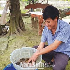 Nông dân Nam Định làm giàu từ nuôi cá chạch sụn