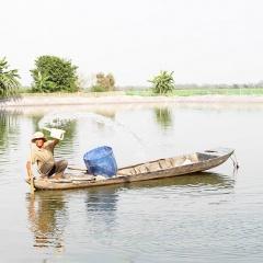 Sử dụng hiệu quả thuốc hóa chất trong nuôi tôm cá