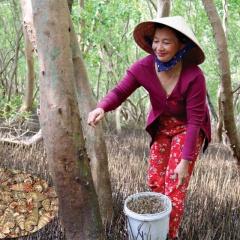 Thu nhập khá từ nuôi ốc len dưới tán rừng