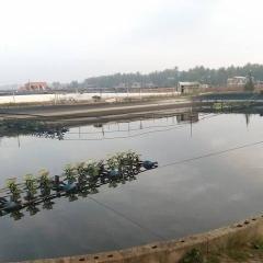 Tuy Phước: Thả giống thủy sản vụ 1 được 503 ha/971 ha