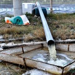 Không nóng lòng tăng nhanh diện tích nuôi tôm siêu thâm canh