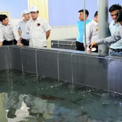 2018: Ninh Thuận kế hoạch sản xuất 25 tỷ tôm post giống