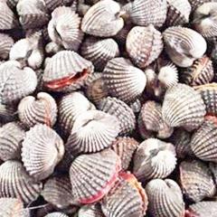 Quảng Ninh: Thu giữ 1,5 tấn sò biển tươi sống nhập lậu
