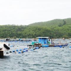 Phú Yên: Giám sát tự động môi trường nước vịnh Xuân Đài