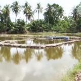 Hồng Dân: Thiếu nước mặn, nông dân mua nước mặn nuôi tôm