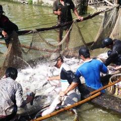 Nước nào đang nhập khẩu thủy sản nhiều nhất từ Việt Nam?