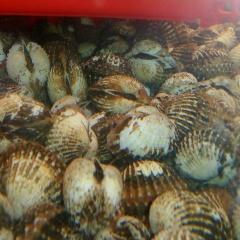 VASEP: Kiến nghị ngưỡng phát hiện chỉ tiêu CAP với thủy sản tiêu thụ nội địa