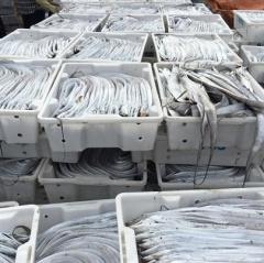 Quỳnh Lưu (Nghệ An) xuất khẩu 2.000 tấn cá hố một nắng