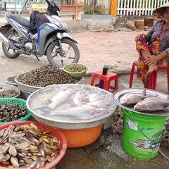 Ngư dân Vàm Nao trúng luồng cá cóc