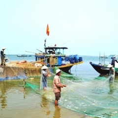 83 loài hải sải biến mất khỏi biển Việt Nam