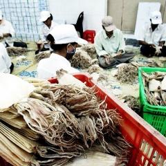 38 thị trường nhập khẩu mực, bạch tuộc của Việt Nam