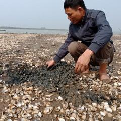 Thanh Hóa: Gần 100 tấn ngao nuôi chết trắng đồng