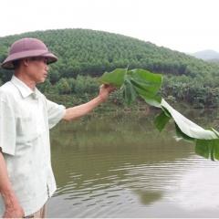 """Nuôi cá trên núi phục vụ """"cần thủ"""", dễ dàng bỏ túi trăm triệu/năm"""