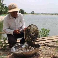 Thách thức của ngành giống cá tra trước biến đổi khí hậu