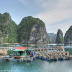 Nuôi hàu ở Việt Nam: Câu chuyện thành công về hợp tác quốc tế