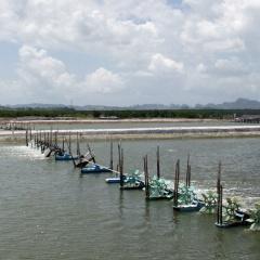 Bạc Liêu: Chủ động phòng chống dịch bệnh trên tôm