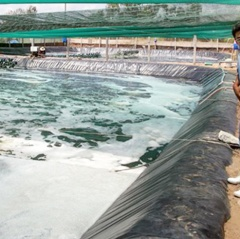 Trà Vinh: Triển vọng nhờ nuôi tôm siêu thâm canh công nghệ cao