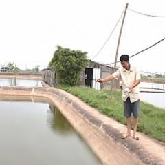 Nam Định: Nuôi tôm bền vững bằng công nghệ vi sinh