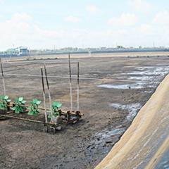 Vũng Tàu: Độ mặn giảm, nhiều ao nuôi tôm bỏ hoang