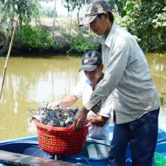 """Thương hiệu """"tôm càng xanh Vĩnh Thuận"""""""