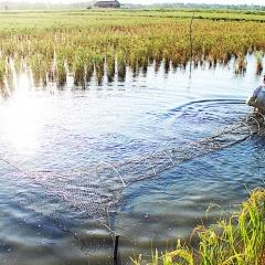 Các biện pháp kỹ thuật nuôi tôm bền vững trên nền đất lúa Lương Nghĩa