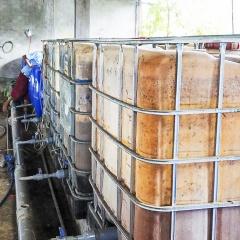 Kinh nghiệm thực tế phòng bệnh cho nuôi tôm