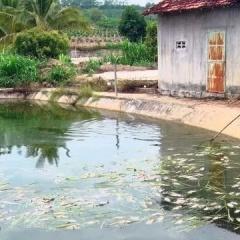Đã xác định được nguyên nhân cá chết bất thường tại Kon Tum