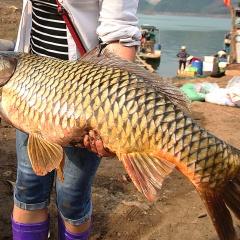 Thăm chợ cá đặc sản ở vùng núi Tây Bắc