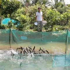 Cần Thơ: Đẩy mạnh mô hình nuôi cá mương kết hợp du lịch