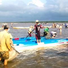 Người dân đổ xô đi cào nghêu giống ở Cà Mau