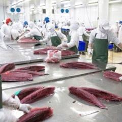 Thị trường Chile - cơ hội mới cho cá ngừ Việt Nam