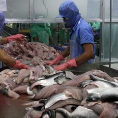 Thiếu nguồn cung, giá cá tra cao kỷ lục chạm mốc 34.000đ/kg