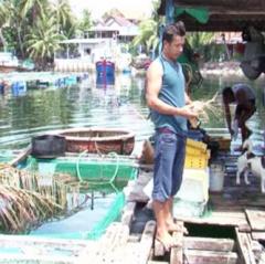 Khánh Hòa khuyến cáo người nuôi giám sát chặt môi trường