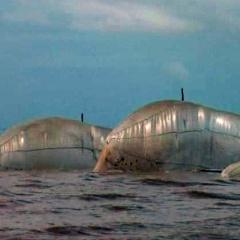 Trà Vinh: Báo động tình trạng khai thác thủy sản bằng lưới mùng