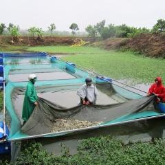 Sản lượng thủy sản ước đạt 2.806,9 nghìn tấn trong 5 tháng đầu năm