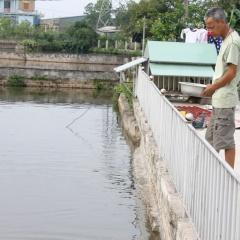 Điển hình nuôi cá Koi Quảng Ninh