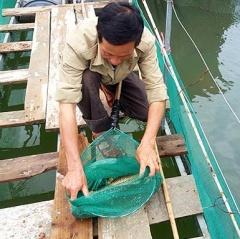 Thương binh vươn lên làm giàu với mô hình nuôi cá lồng